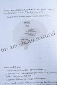 DSC_0010 copie