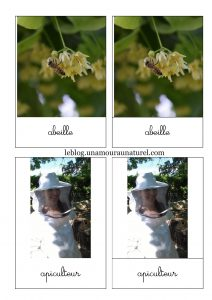 nomenclature-abeille 1 copie
