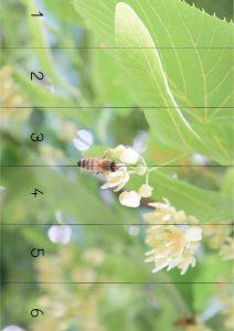 puzzle abeille -